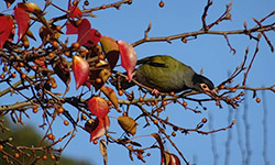 Bird in a tree - Narara Eco Village