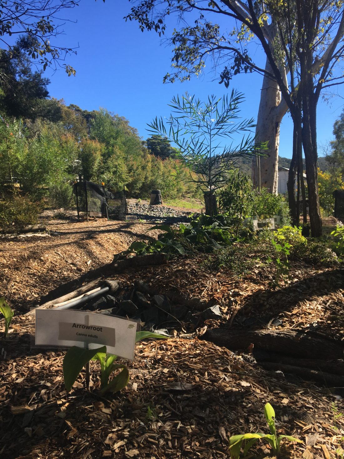 Scribbly Gum Permaculture Patch