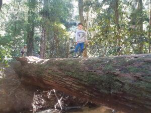 Into the Trees Ecovillage Playtime @ Narara Ecovillage