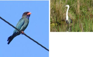 Guided Bird Walk: Introduction to the Birds of the Narara Ecovillage