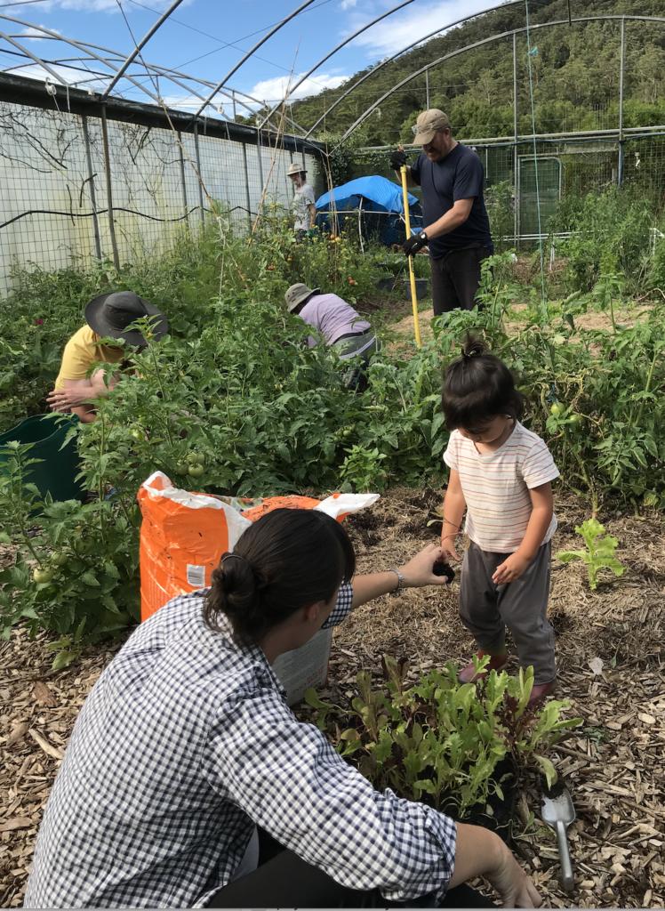 Volunteer Community-Garden